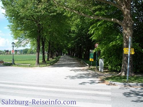 Hellbrunner Allee vom Parkplatz Hellbrunn