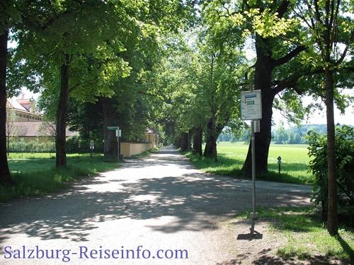 Radwege an der Hellbrunner Allee