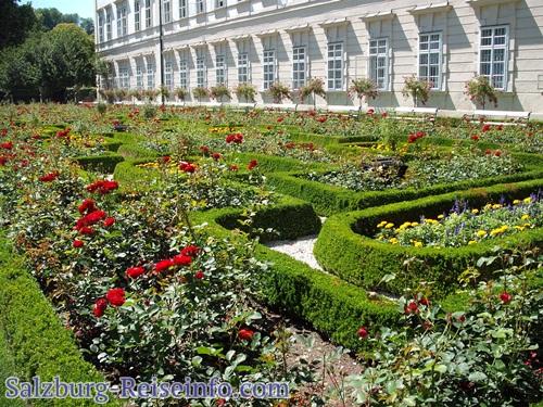Buxbaum zur Einfassung von Blumenbeeten Schlossgarten