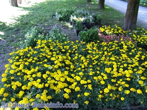 Zwischengelagerte Blumen für die Parks