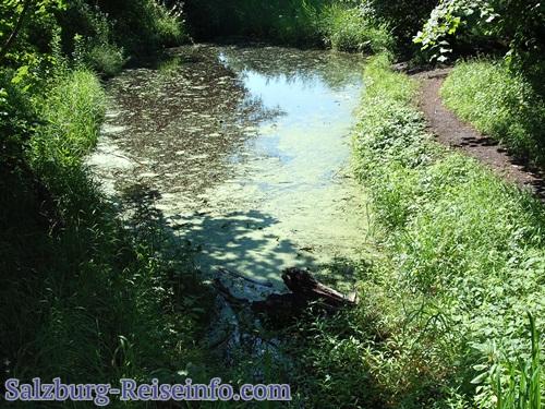 Königswäldchen mit kleinem Teich in Leopoldskron, idyllisch am Spazierweg