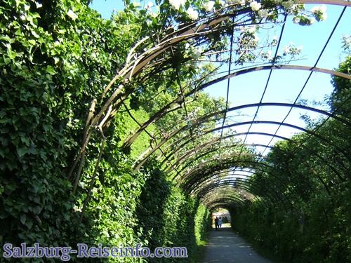 Kletterpflanzen rund um eine Passage im Mirabellgarten