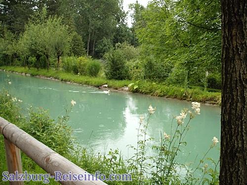 Radweg Almkanal Enten und Schwäne