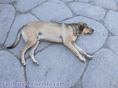 Die wichtigsten Tipps Städtereise Salzburg mit Hund