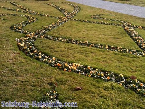 Stiefmütterchen überwintert in den Gartenanlagen rund um das Schloß Mirabell